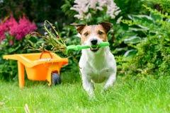 Концепция открытого и безопасного для любимцев садовничает с засорителями собаки очищая с грабл стоковая фотография rf