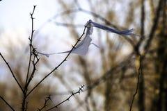 Концепция - охрана окружающей среды и пластиковый сброс, проблемы окружающей среды часть полиэтиленового пакета зацеплянная ветвь стоковое фото