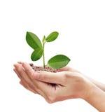 Концепция о расти дерево - природа влюбленности - сохраньте мир Стоковые Изображения