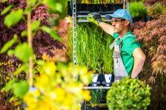 Концепция парника садовничая Стоковая Фотография RF