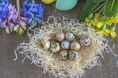 Концепция пасхи или весны с яичками триперсток в гнезде и весне цветет на buralp Стоковое Изображение