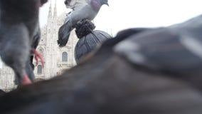 Концепция перемещения, праздников и каникул зимы - счастливый молодой человек принимает фото selfie со смешными голубями перед Du видеоматериал