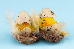 Концепция праздника пасхи с 2 цыпленоками пасхи на голубой предпосылке Стоковое Изображение
