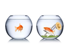 Концепция праздника рыб Стоковое Изображение