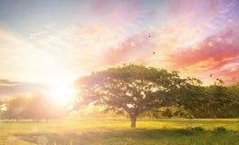 Концепция предпосылки природы: Одно дерево на заходе солнца луга стоковые изображения rf