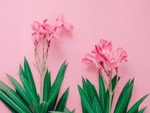 Концепция предпосылки лета с букетом розового олеандра тропическим Стоковое Фото