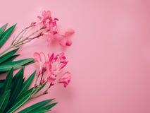 Концепция предпосылки лета с arr цветка розового олеандра тропическим Стоковые Изображения RF
