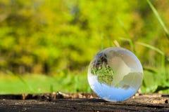 Концепция природы, зеленого хрустального шара леса на деревянном пне с листьями Стоковое Фото