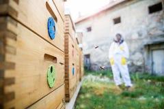Концепция пчеловодства Beekeeper стоит рядом с ульями стоковая фотография