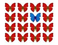 Концепция разнице в показа Butteflies стоковое изображение rf