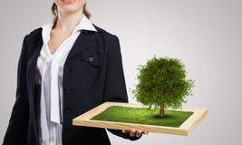 Концепция растительности Стоковое Изображение