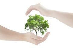 Концепция рук защищая свежее зеленое дерево Стоковое Изображение RF