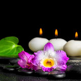 Концепция свечей строки белых, dendrobium курорта цветка орхидеи Стоковая Фотография RF