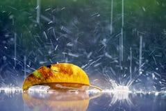 Концепция сиротливой желтой дождевой капли лист сиротливая Стоковое фото RF