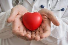 Концепция трансплантации сердца Доктор держит красную модель сердца в руках стоковые фотографии rf