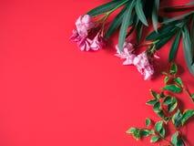 Концепция тропических и лета flatlay минимальная от розового острословия цветка Стоковые Фотографии RF