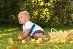 Концепция фестиваля сбора Смешной ребёнок сидя среди листьев желтого цвета и зеленых яблок стоковое фото rf