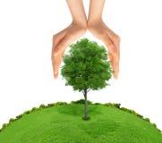 Концепция человеческой руки защищая зеленое дерево Стоковое Изображение RF