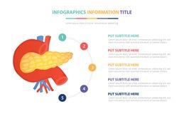 Концепция шаблона человеческой анатомии панкреаса infographic с 5 пунктами перечисляет и различный цвет с чистой современной бело иллюстрация вектора