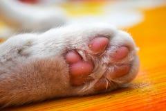 Концепция любимчиков лапок кота Стоковое фото RF
