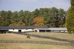 конюшни лошади Стоковые Изображения