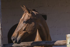Конюшни лошади Стоковая Фотография