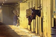 конюшня беговой дорожки belmont стоковая фотография rf