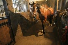 конюшня лошади Стоковое фото RF