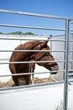 конюшня лошади Стоковое Изображение