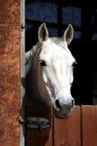 конюшня лошади Стоковые Изображения