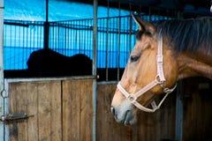 конюшня лошади Стоковые Изображения RF