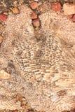 Копая экскаватором ископаемые динозавра Стоковая Фотография RF