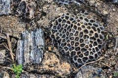 Копая экскаватором ископаемые динозавра Стоковые Изображения