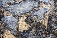 Копая экскаватором ископаемые динозавра Стоковое фото RF