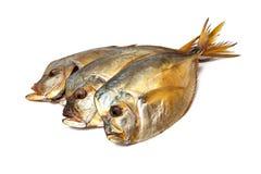 Копченые рыбы на белой предпосылке Стоковое Изображение