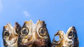 Копченые рыбы на плите в лете, Тайване Стоковое Изображение RF