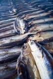 Копченые рыбы на плите в лете, Тайване Стоковое фото RF