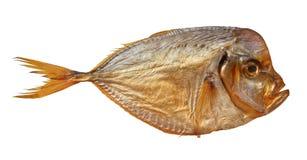 Копченые setapinnis vomer рыб на белой предпосылке Стоковое Фото