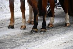 Копыто лошади на детали снега стоковые изображения
