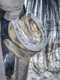 Копыто лошади holde Farrier, кузнец делает horseshoeig, стоковые изображения