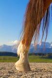 Копыто ноги лошади стоковые изображения rf