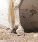 Копыто ` s лошади стоковая фотография