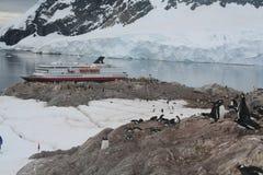 корабль rookery пингвина gentoo круиза Стоковые Изображения RF