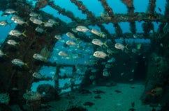 Кораблекрушение Стоковая Фотография RF