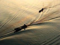 Корабль мотора в силуэте реки стоковое изображение
