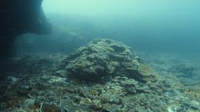 Коралловые рифы и школа малых черных рыб акции видеоматериалы