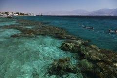 Коралловый риф в заливе Eilat стоковые изображения rf