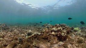 Коралловый риф и тропические рыбы сток-видео