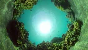 Коралловый риф и тропические рыбы видеоматериал