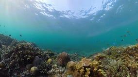 Коралловый риф и тропические рыбы акции видеоматериалы